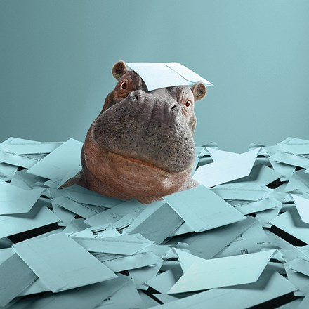 Instant Finance Hippo buried in a pile of bills