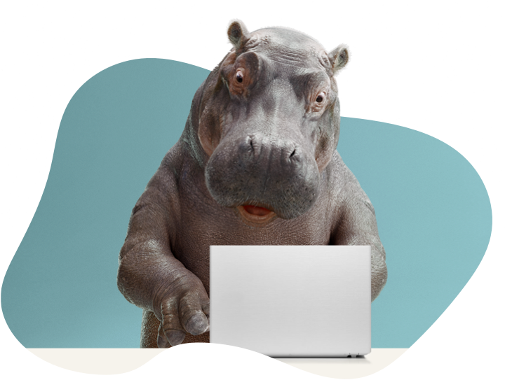 Hippo applying online