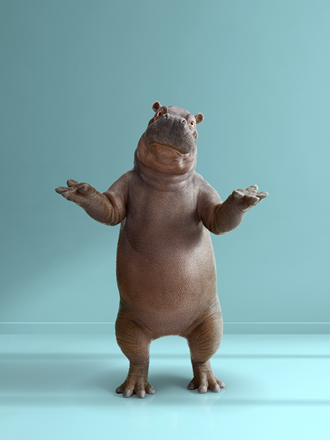 Confused Instant Finance Hippo with arms up